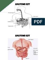 ANATOMI GIT