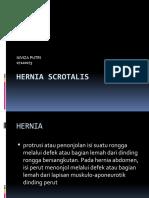 Hernia Scrotalis