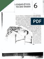 Sistema Esqueletico (Profª Daniella)