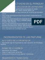 3 Pasturas Cultivadas en El Paraguay
