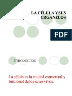Teoría celular, organelos, citoplasma