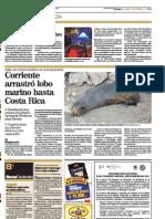 Corriente arrastró lobo marino hasta Costa Rica