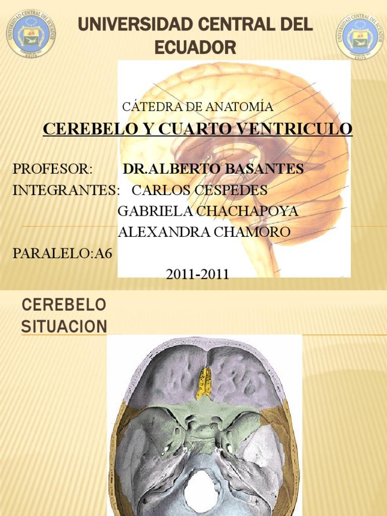 Cerebelo y Cuarto Ventriculo
