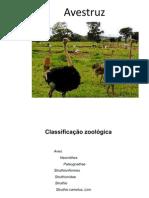 criação de avestruzes