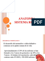 Anatomia de Las Vias Urinarias