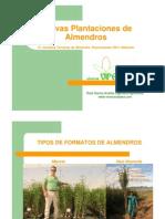 Nuevas Plantaciones de Almendros
