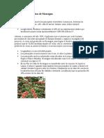 Actividades económicas de Nicaragua