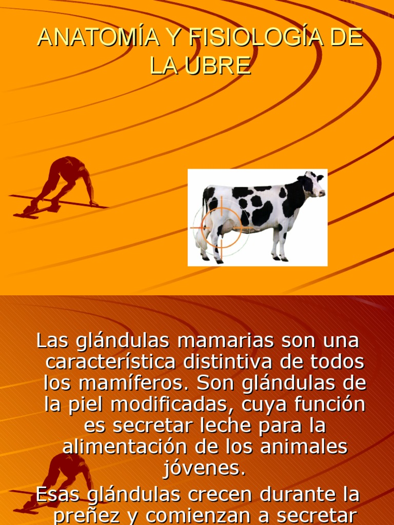 Moderno Anatomía De Mamíferos Y Fisiología Ppt Fotos - Imágenes de ...