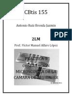 Practica 3 Observacion de La Camara de Neubauer.