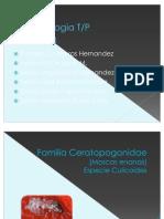 Clase Completa de Parasitologia Eq3