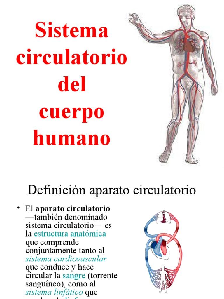 Anatomía definición vascular sistema de del