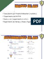 Presentación duplicación ADN