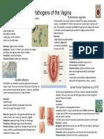 Pathogens of the Vagina-Annie Espinosa