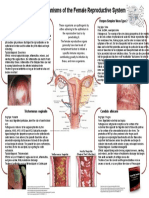 Pathogens of the Female Reproductive System- Leah Nechamkin
