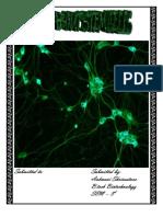 Stem Cells - Term Paper