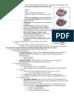 13 - Physiology of Penile Erection and Pa Tho Physiology of Erectile Dysfunction