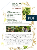 Morus Alba_Morer blanc_Morera Blanca_White Mulberry.
