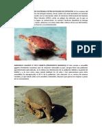 Animales y Plantas en Peligro de Extincion..