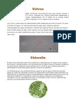 Investigacion de La Algas