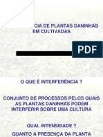 Planta Daninha_ Interferência