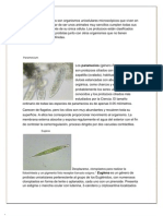 observacion microscopica protozoarios( practica No 1)