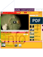 Youtube CaneInfo 2