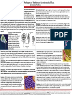 Pathogens of the Gut - Christine Prochnow