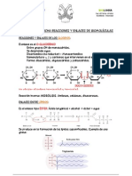 FICHA enlaces bioquímica