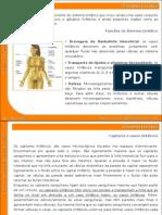 08_sistema_linfatico