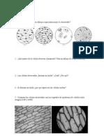 Cuestiones_practica_epiteliales