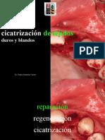 cicatrizacion tejidos orales