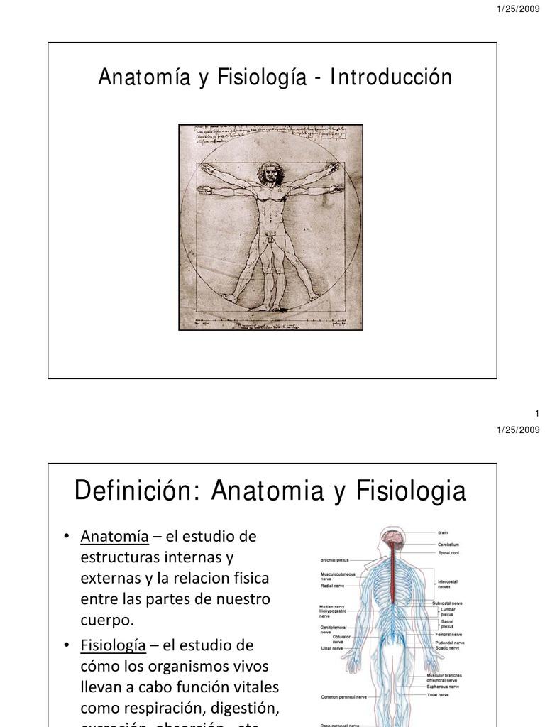 Famoso Glándulas Integumentarias Galería - Anatomía de Las ...