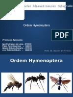 Ordem Hymenoptera II