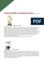 funghi_commestibili