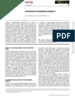 Towards the Molecular Mechanism of Respiratory Complex 1