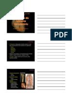 Anatomia Sistema Circulatório