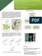 Determinacin de Triterpenos en Plantas Por Medio De