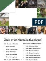 Ordo-ordo Mamalia
