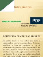 Trabajo de Celulas Celulas Madres