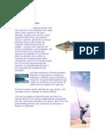 Ac Fish 04 Pesca de La Corvina