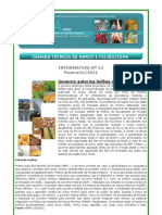 FEIJÃO Informativo Fev-2011 ICEPA