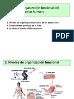diferenciación y tejidos