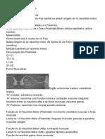 Resumo de Neuroanatomia