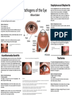 Eye Infections by Allison Baker