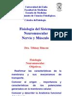 Medicina - Fisiologia. Neuromuscular