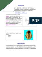 Edad Cronologica Dentaria en Vacunos
