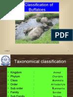 buffalobreeds1-100831021520-phpapp01