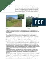 ESACB investiga produção de Bioetanol na Beira Interior_notícia