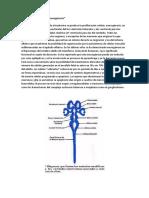 Proliferación neuronal