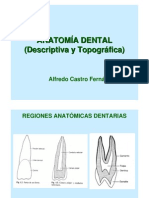 anatomadental-090915112728-phpapp01